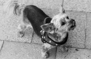 Ladenhund Gina. Foto: Heike Bogenberger.